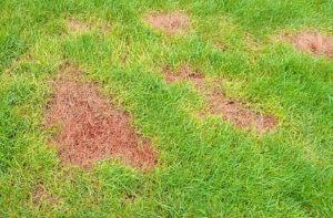 dry spot repair dr sprinkler provo
